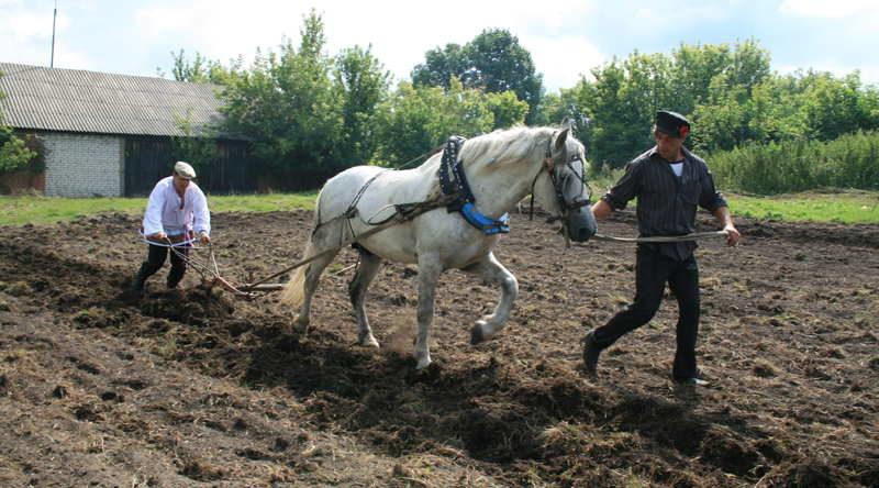 Как в современной России гнобят крестьян