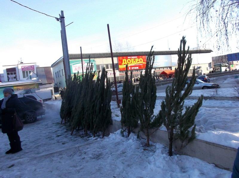 Торговля елками