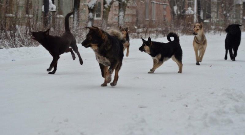 В год Собаки — собачья жизнь?