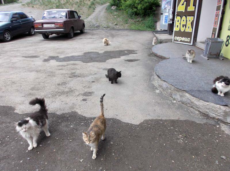 Медногорские кошки